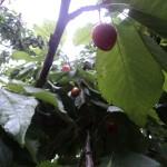 طراوت باران بهاری اردیبهشت ماه در رابر