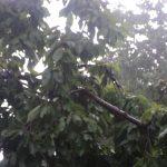 اولین باران تابستانی شهرستان رابر را شست