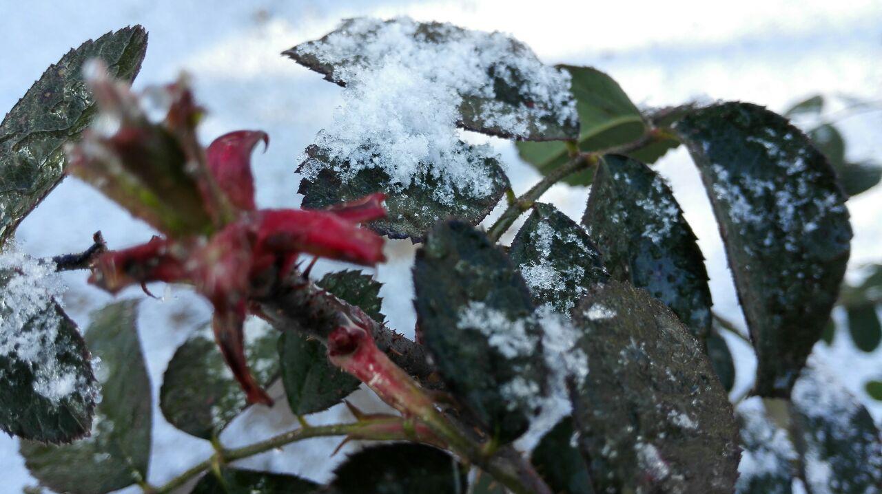 آغاز بارش برف در شهرستان رابر/تصاویر