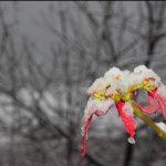 بارش آخرین برف زمستانی ۹۵ در شهرستان رابر /تصاویر