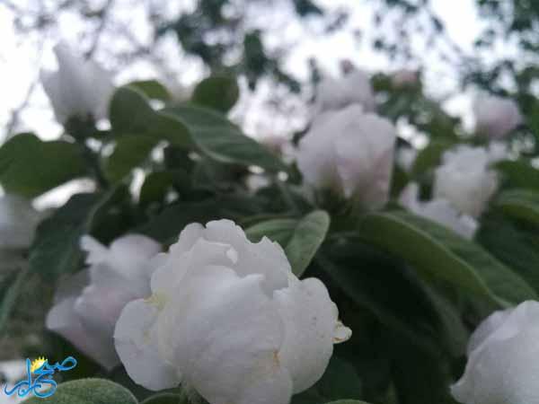 photo_2017-04-18_23-20-04