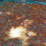 فصل ترشاله های خوشمزه و خوش رنگ رابر به روایت تصویر
