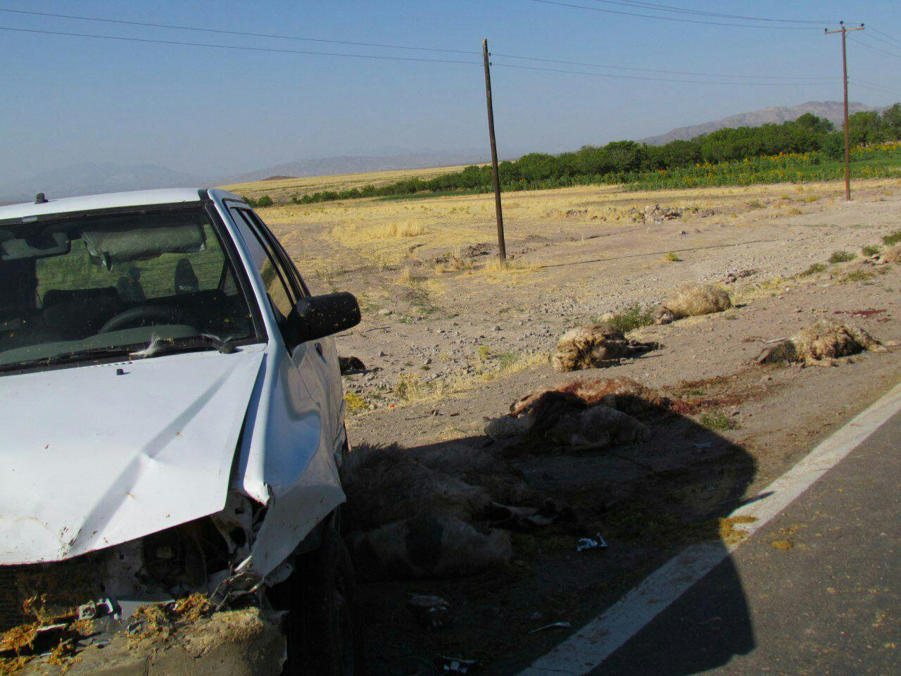 برخورد پراید با گله احشام درمحور روستای کهنوج رابر