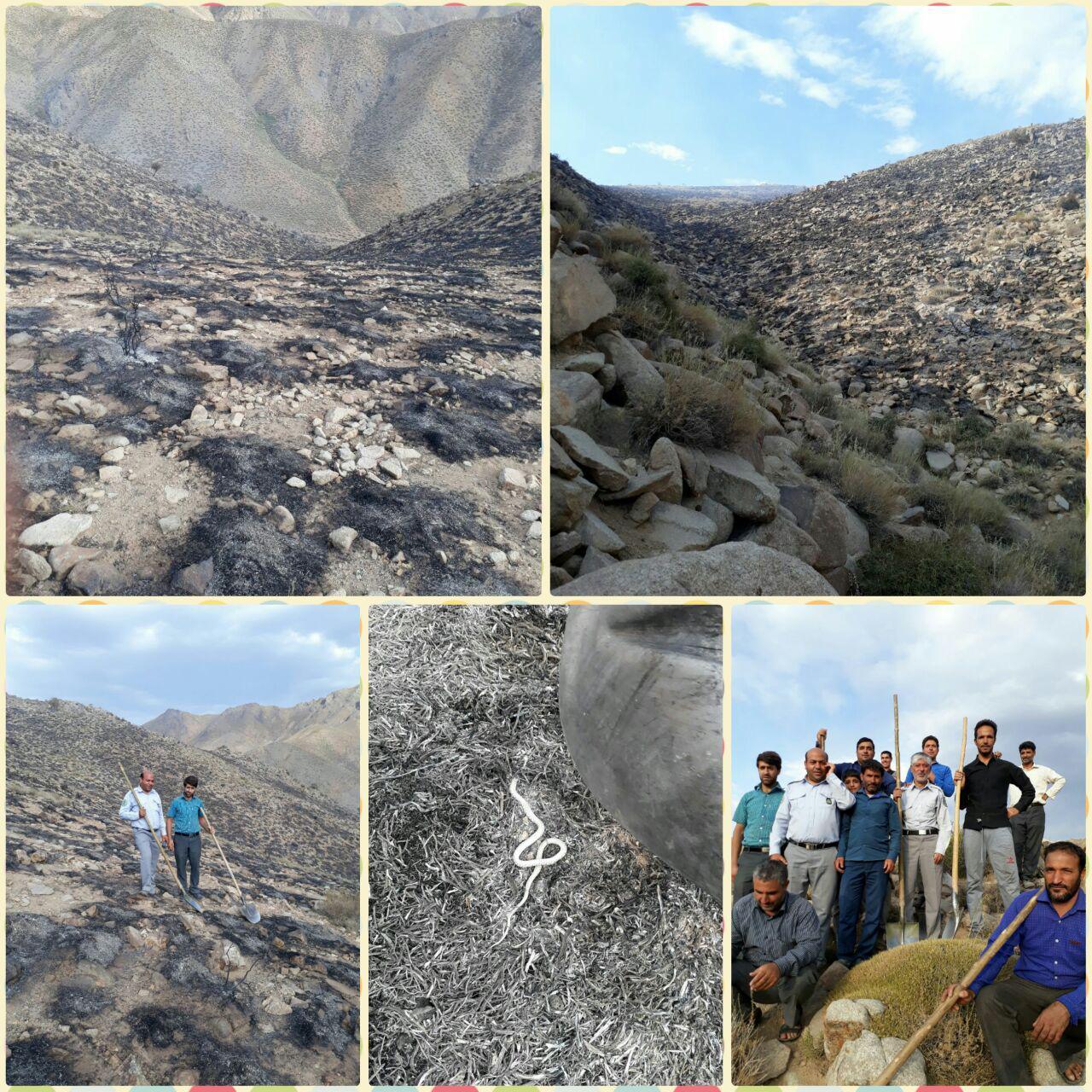 وقوع آتش سوزی در اراضی جنگل  اشکان رابر/ تصاویر