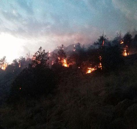 آتش در جان درختان ۳۰۰ساله رابر کرمان