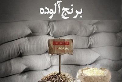 واردات ۳۳ هزار تن برنج آلوده اروگوئهای به کشور/ سرنوشت سوغات آمریکای جنوبی چه میشود؟