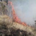 آتش به جان درختان پارک ملت رابر افتاد /تصاویر