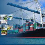 توصیههایی برای مدیریت واردات/ ورود کدام کالاها باید ممنوع شود؟ +جدول