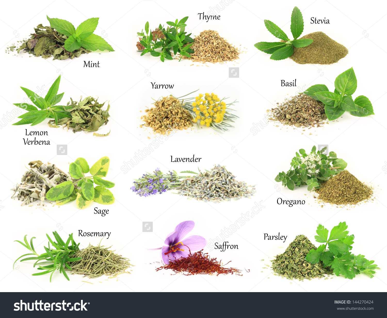 شهرستان رابر گنجینه گیاهان دارویی