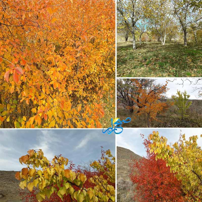 پاییز دیدنی روستای سیه بنوئیه رابر
