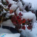 اولین برف زمستانی هنزا به روایت تصویر